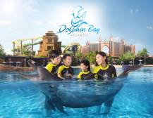 Swimming With Dolphins at Atlantis The Palm Dubai