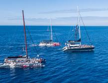 Tenerife Whale & Dolphin Watching Tours