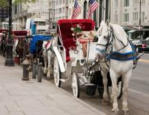 Horse & Carriage Ride in Central Park