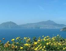 Full Day Ishia & Mortella Gardens - from Sorrento