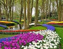Keukenhof Gardens & Bulbfields