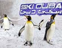 Penguin Encounter at Ski Dubai
