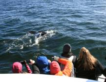 Whale Watching Tours - Iceland