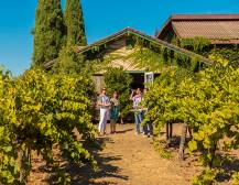 Wine Country Half Day Tour - From San Francisco