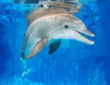 Winter The Dolphin & Clearwater Beach